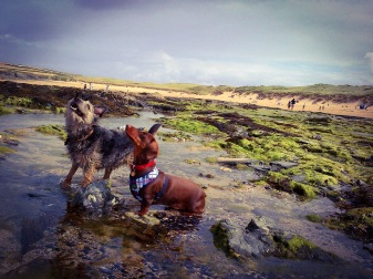 Treyarnon Dogs