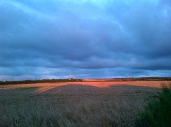 Treyarnon Fields