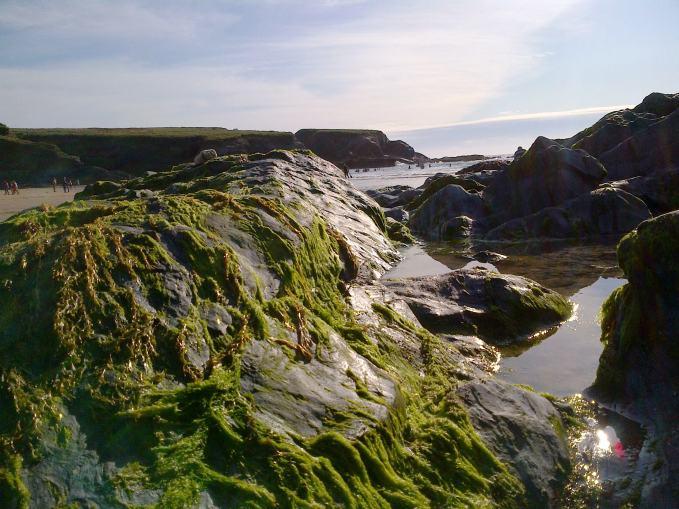 Treyarnon seaweed