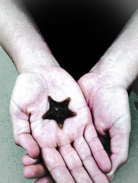 Treyarnon Starfish